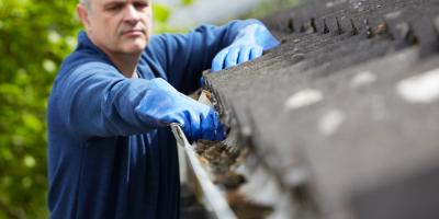 How Can Pests Affect My Gutters?, Anderson, Ohio