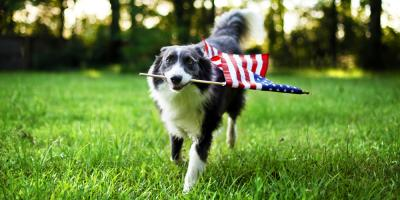 3 Common Fourth of July Pet Dangers, High Point, North Carolina