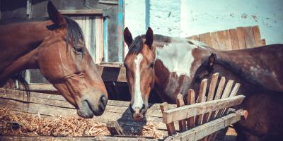 Missouri's Best Feed Dealers Explain What to Look for in Horse Feed, Foristell, Missouri