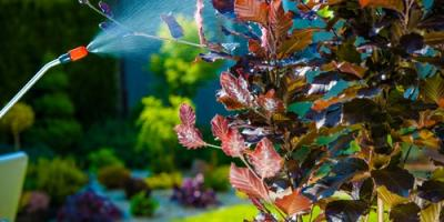How 4 Different Tree Sprays Can Help Protect Your Foliage, Lodi, California