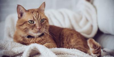5 Signs Your Cat Needs a Pet Hospital, Maui County, Hawaii
