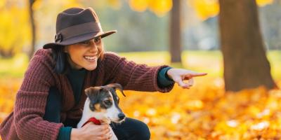 4 Tips to Keep Your Pet From Needing Veterinary Care This Halloween, Sycamore, Ohio