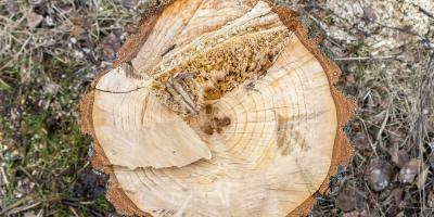 3 Reasons to Avoid DIY Stump Grinding, York, South Carolina