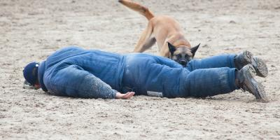 Personal Injury Guide: How to Pursue Compensation After a Dog Bite , Kalispell, Montana