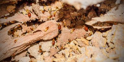 3 Tips for Preventing Termites From Entering Your Home, Koolaupoko, Hawaii