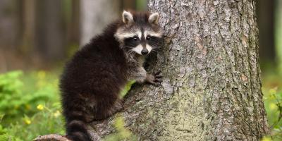 3 Pests That Seek Shelter in Homes During Winter, Lincoln, Nebraska