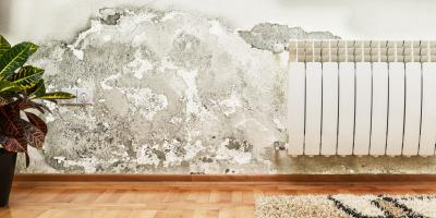 Why Should You Use Professional Mold Removal Over DIY Methods?, Shenandoah, West Virginia