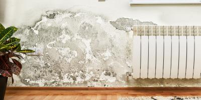How to Check for Mold When Looking at Potential Homes, Fairfax, Ohio