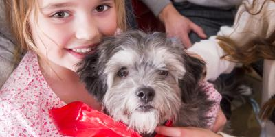 Animal Hospital Shares 5 Tips for Puppy-Proofing Your House, High Point, North Carolina