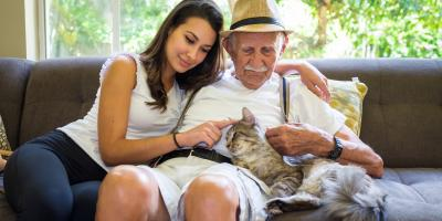 What You Should Know About Senior Pet Care, Mineral Springs, North Carolina