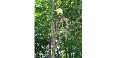 Why You Should Leave Tree Trimming to the Professionals, Cincinnati, Ohio