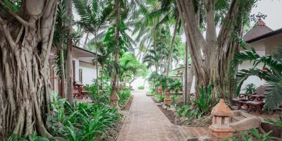 Why You Should Use Native Hawaiian Plants in Your Garden, Koolaupoko, Hawaii
