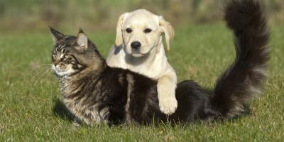How to Prevent Your Pets From Acquiring a Tick-borne Disease, Prairie du Chien, Wisconsin