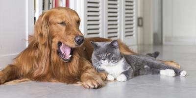 What Happens to Pets During a Divorce?, O'Fallon, Missouri