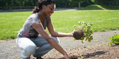 3 Different Types of Mulch for Your Plants, Fairfield, Connecticut
