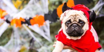 3 Pet Care Tips to Embrace on Halloween, Sycamore, Ohio