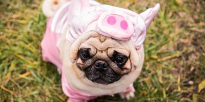 How to Safely Dress Up Your Pet for Halloween, Shelby, Wisconsin