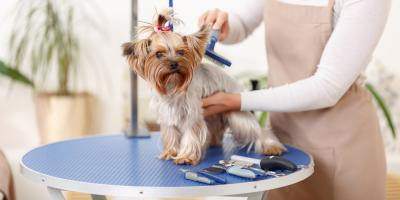 5 Dog Grooming Tips for Fall, Lincoln, Nebraska