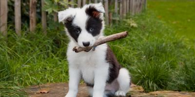 A Pet Owner's Guide to Puppy Care, Honolulu, Hawaii
