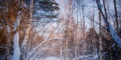 How to Tackle Winter Tree Maintenance, Newport-Fort Thomas, Kentucky
