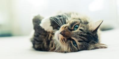 Why Regular Veterinary Visits Are an Important Part of Pet Care for Cats, Covington, Kentucky