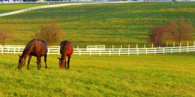 Local Fence Contractor's Guide to Livestock Enclosures, Spencerport, New York