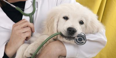 5 Types of Insurance an Animal-Related Business Should Have, Lincoln, Nebraska