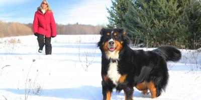A Guide for Protecting Your Dog's Paws This Winter , Elyria, Ohio