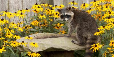 Do's & Don'ts for Keeping Critters Away From Your Home, New Milford, Connecticut