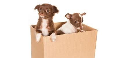 3 Tips for Moving With Pets, Ewa, Hawaii