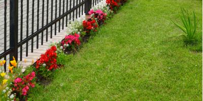 How to Identify 3 Common Lawn Problems, Cromwell, Connecticut