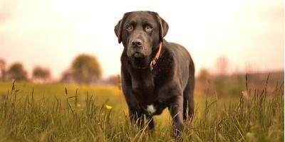 4 Tips for Choosing the Best Dog Sitter for Your Pet, Manhattan, New York