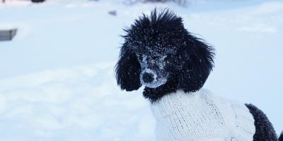4 Cold Weather Pet Safety Tips From La Crosse's Best Pet Supplies Store, La Crosse, Wisconsin