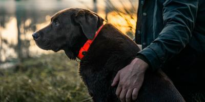 3 Signs Your Dog Needs a New Collar, Jacksonville East, Florida