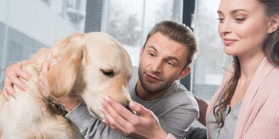 How to Introduce Yourself to an Unfamiliar Dog, Lincoln, Nebraska