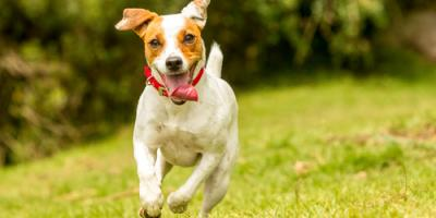 The 4 Most Commonly Asked Questions About Dog Boarding in Keaau, Keaau, Hawaii