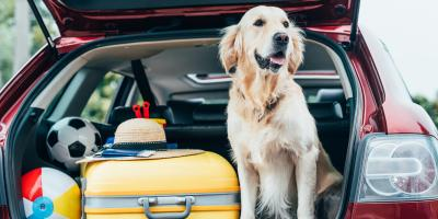 3 Items to Pack for Dog Boarding, McKinney, Texas