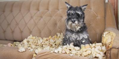 How to Reduce Your Dog's Separation Anxiety, Conway East, South Carolina