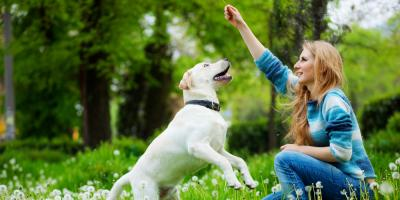 3 Healthy Dog Treat Options From Lauderhill's Dog Care Team, Sunrise, Florida
