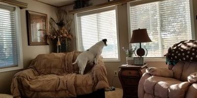 Dog Care Experts Shed Light on Pet Separation Anxiety, Bad Rock-Columbia Heights, Montana