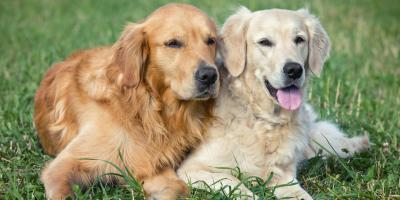 Top 4 Items to Pack for Dog Day Care, New York, New York