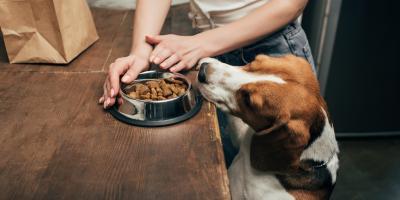How Much Should You Feed Your Dog?, Mililani Mauka, Hawaii