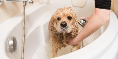 Should You Bathe Your Dog?, Manhattan, New York