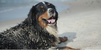 4 Helpful Tips for Bathing Your Pup Between Dog Grooming Appointments, Newport-Fort Thomas, Kentucky