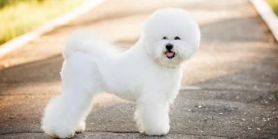5 Dog Grooming Tips to Maintain White Coats, Highland Village, Texas