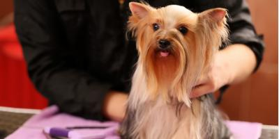 Dog Grooming Tips to Keep Your Pup Looking Fresh This Summer, Lincoln, Nebraska