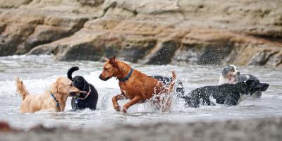 3 Common Social Dog Diseases, Keaau, Hawaii