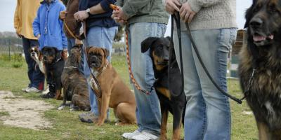 3 Signs to Enroll Your Dog in Training Classes, Buckeye Lake, Ohio