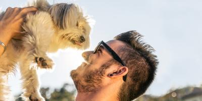 3 Major Benefits of Dog Day Care, Brooklyn, New York