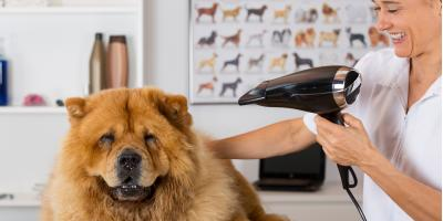 3 Ways to Manage Dog Shedding in Your Home, Fairbanks North Star, Alaska